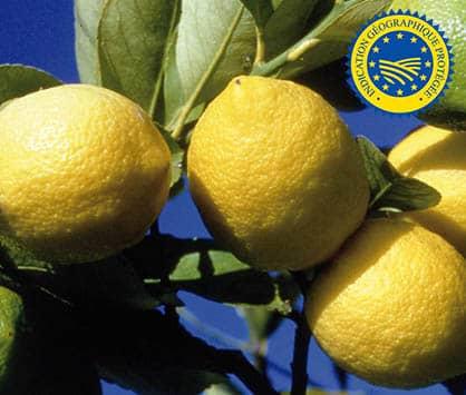 le citron de Menton